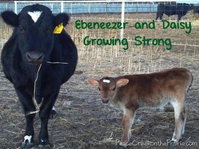 Farm Life Woes.  Happy New Year?