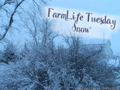 FarmLife Tuesday Tending to Livestock, sick baby, and keeping up during a snow storm on the farm.