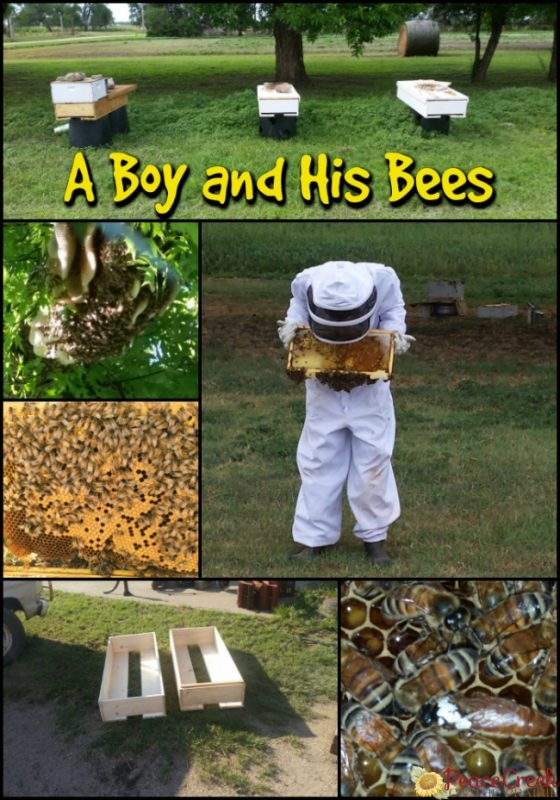 A Homeschooled 16 year old and his love of bees has become part of his school, as he becomes a bee keeper.